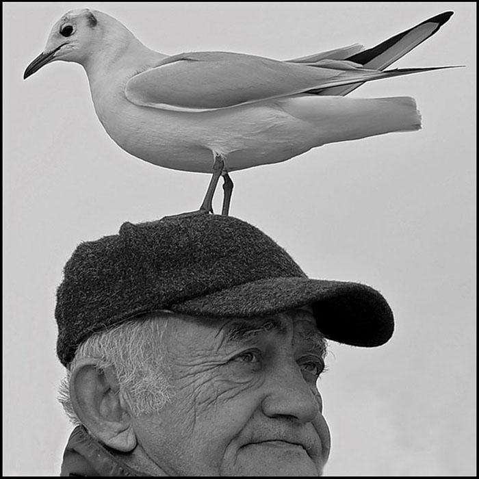 L'HommeEtL'Oiseau