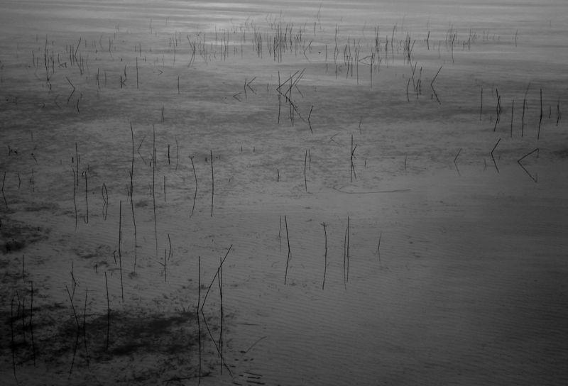 étang de Sanguinet, port de Navarosse, Biscarosse, 2008.