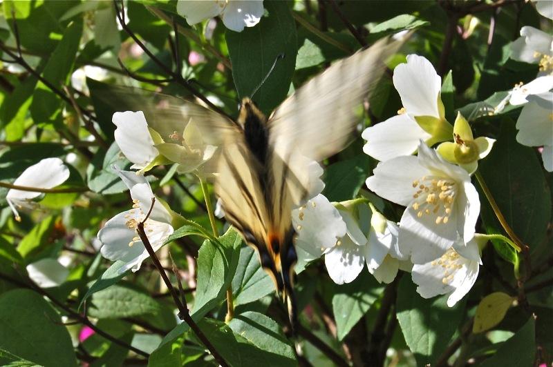 L'effet papillon, clin d'oeil à Edward Lorenz