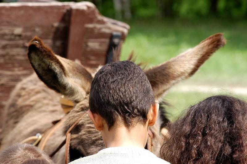 Le bonnet d'âne