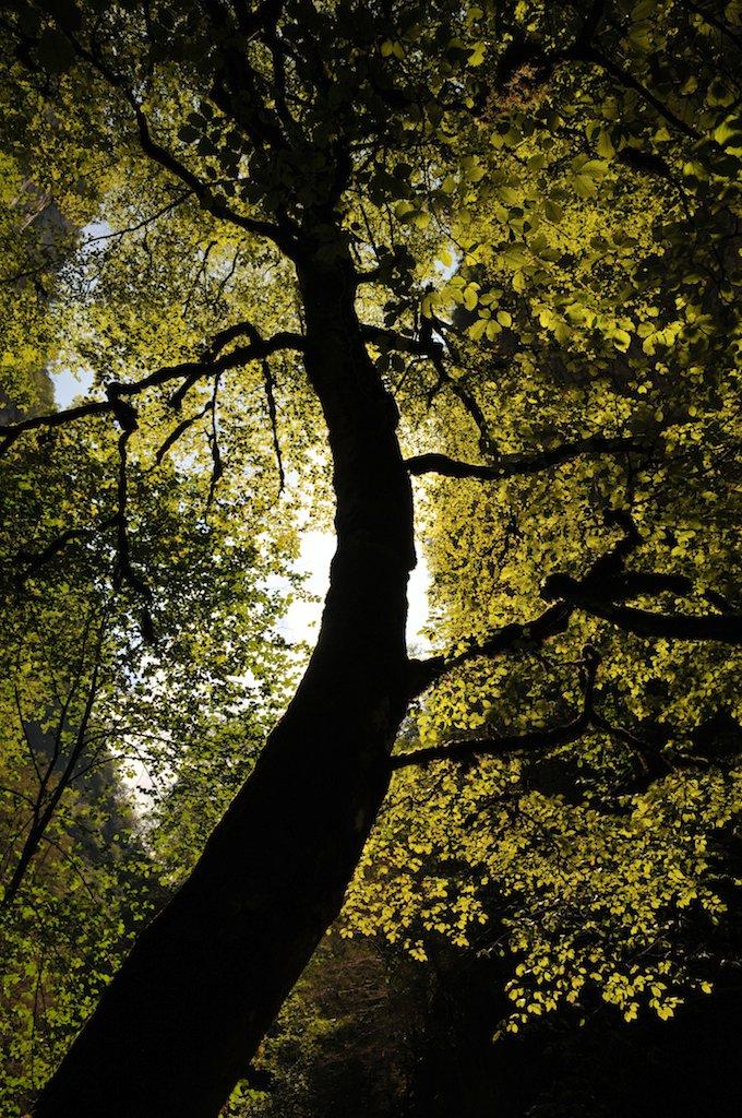 Echo au pied de l'arbre de Laurent - PV