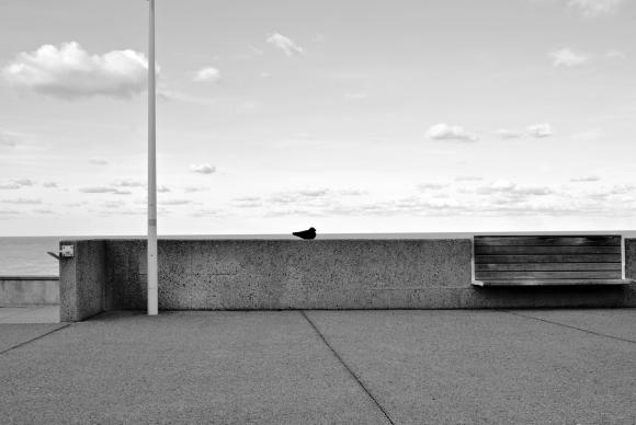 Le-banc-et-l'oiseau.jpg