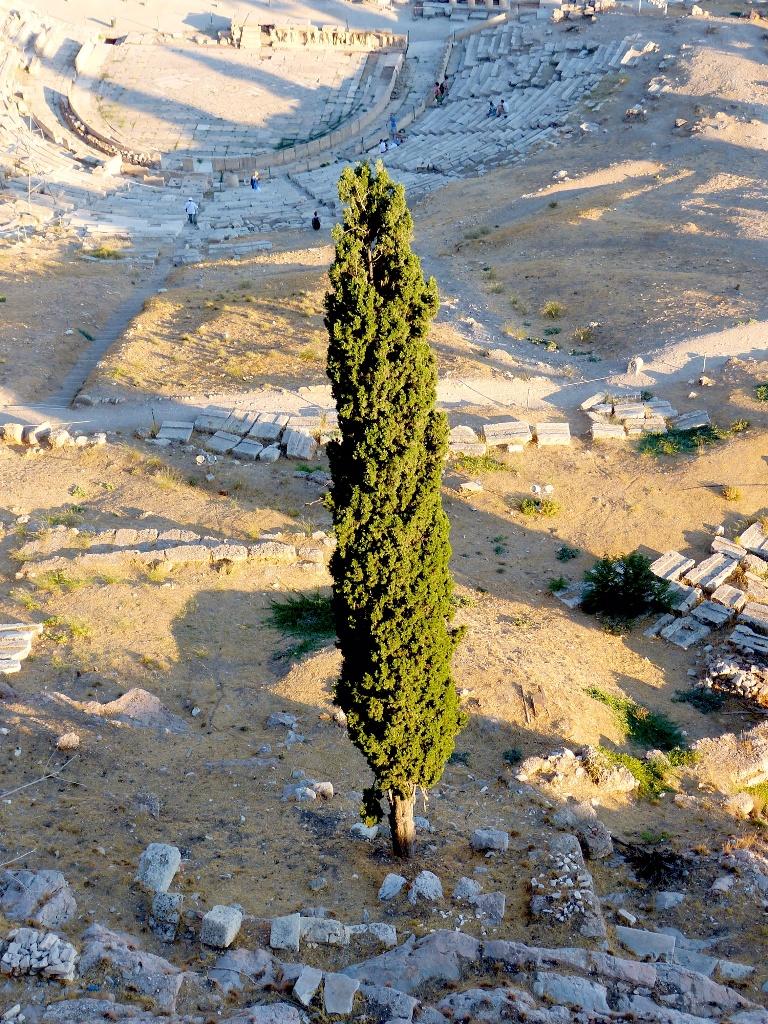 L'arbre seul - CA