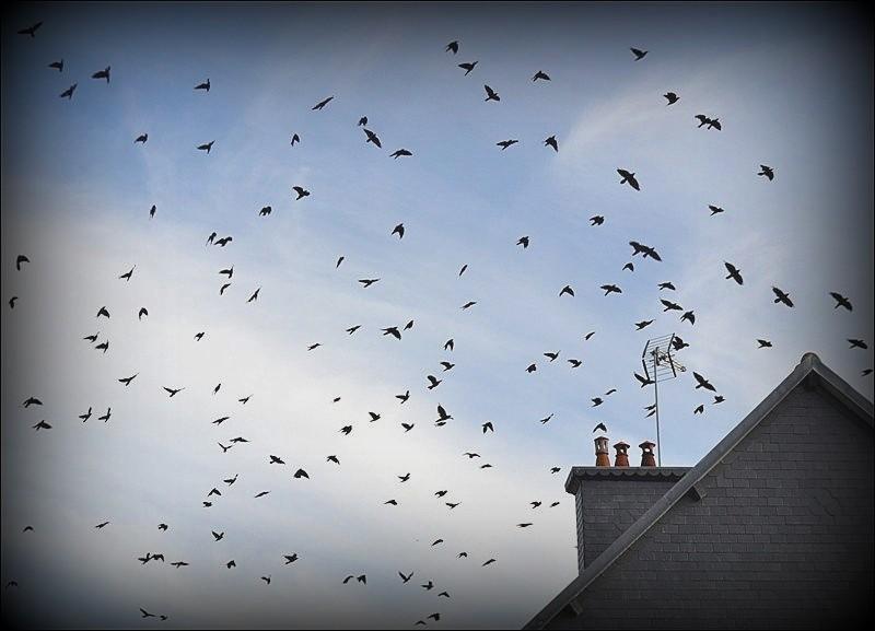 Les oiseaux0000