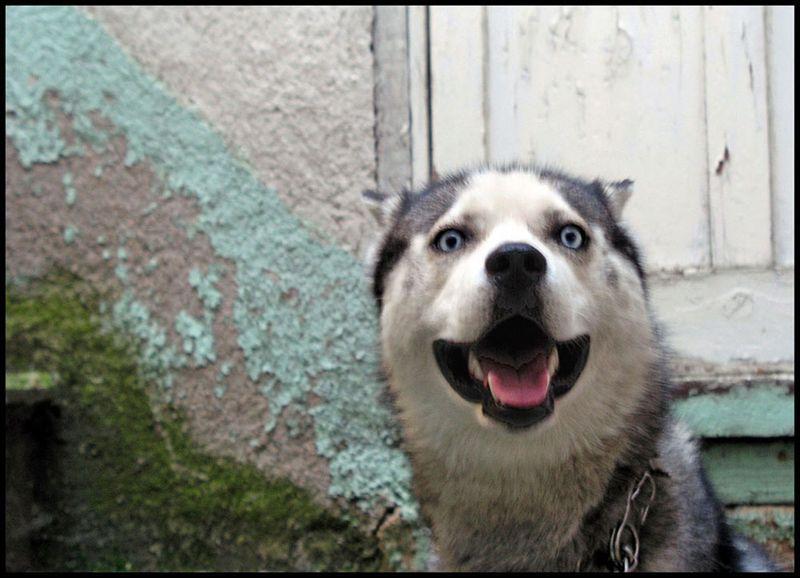 Le chien, 6 décembre 2014, 16 h - Maria